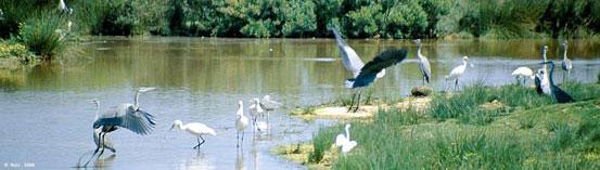Siba-Parc_ornithologique_1186